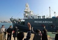 """صيادون يابانيون يقتلون 177 حوتا """"لأهداف علمية"""""""