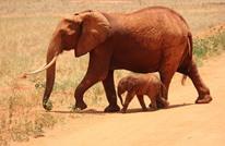 """مخرجة هندية تسلط الضوء على تعذيب الفيلة بـ""""اسم الدين"""""""