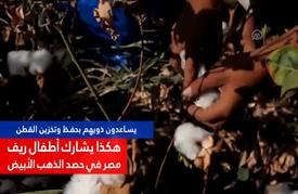 أطفال ريف مصر يشاركون ذويهم في حصد القطن