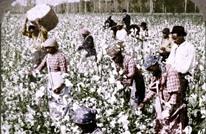 NYT: هكذا أنعشت تجارة القطن سوق العبيد في أمريكا